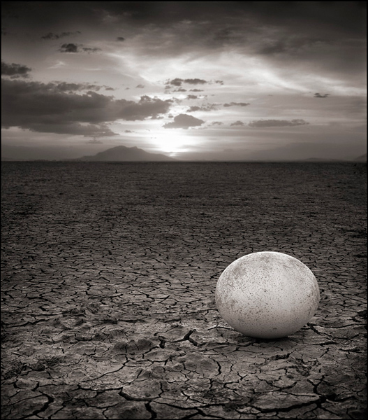 abandoned-ostrich-egg-l