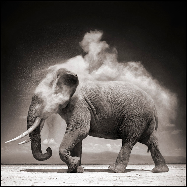elephant-with-exploding-dust