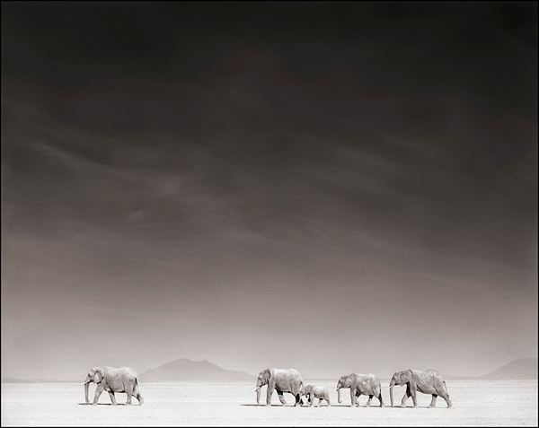 elephants-on-bleached-lake-bed