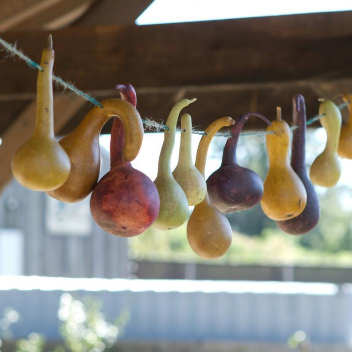 700_gourds-on-string