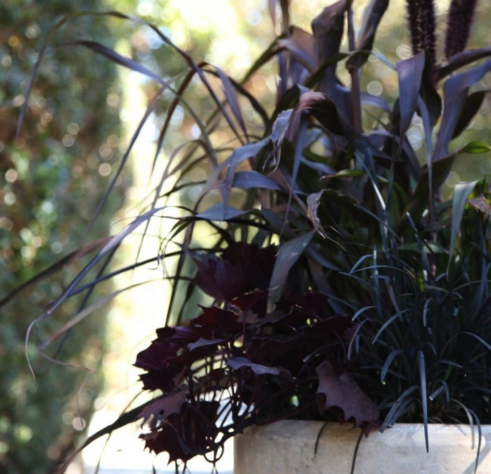 October Container Gardening for Halloween and Fall, Gardenista hero