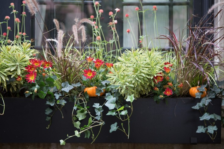 curb-appeal-halloween-window-box-pumpkins-brooklyn-gardenista